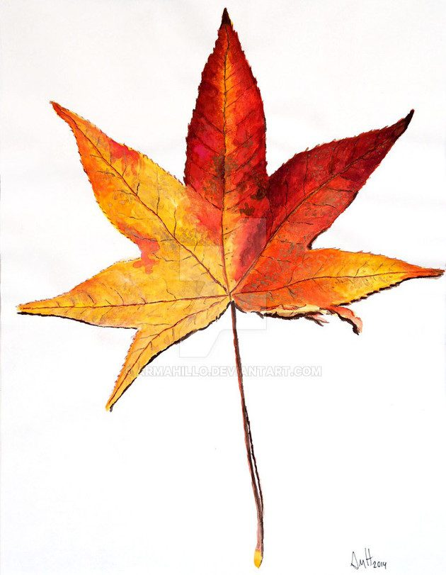 Watercolor painting of a maple leaf